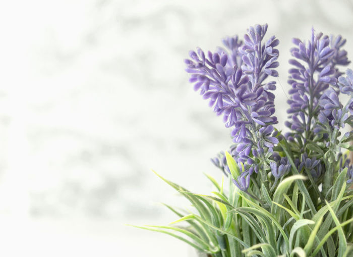 lavender Lavender Violet Flower Green Color House Plant Plant Freshness Beauty In Nature Studio Shot Blossom Nature Nature Photography Growth Flowering Plant Close-up No People Vulnerability  Fragility Purple Calm Calmness Tranquility Perfume Colorful Decoration My Best Photo