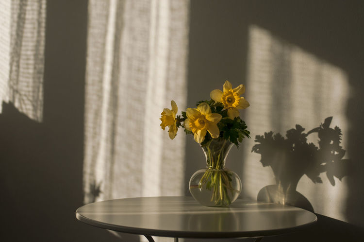 I draw my strength from everyday shadows EyeEm Best Shots EyeEm Gallery Inner Power Beauty In Nature Close-up Flower Flower Arrangement Flower Head Flowering Plant Fragility Freshness Home Interior Indoors  Nature No People Plant Still Life Table Vase Vulnerability  Window