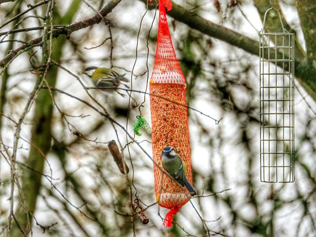 Hanging Tree Outdoors No People Branch Day Forest Nature Close-up Birds Beauty In Nature Autumn Nature Tree Flying Bird Bird Feeder Hanging