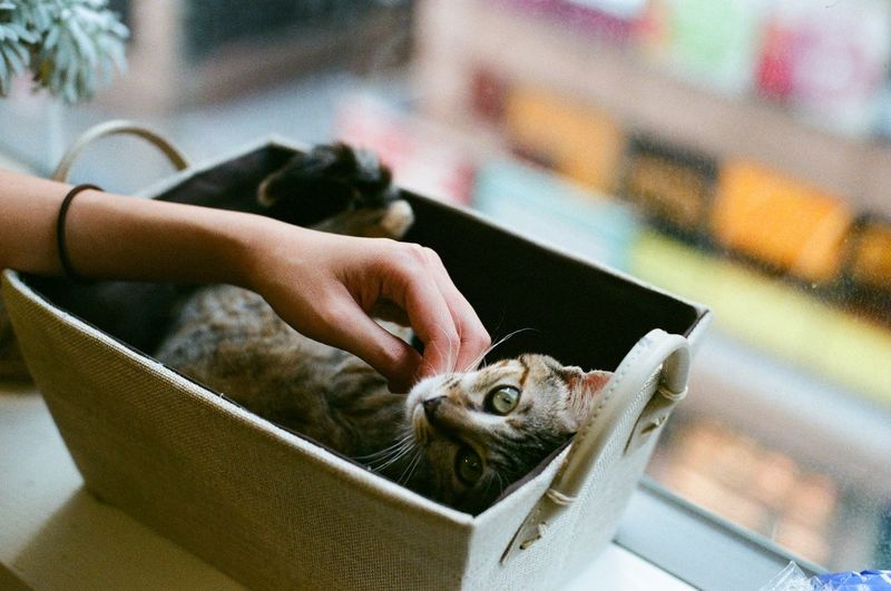 Cropped Hand Of Woman Touching Kitten Relaxing In Container At Window