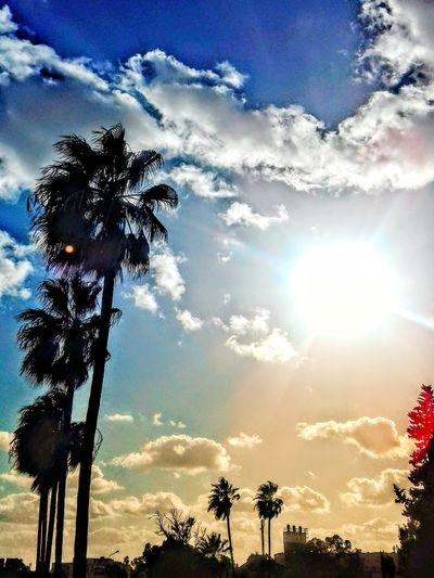 Tree Palm Tree Silhouette Sunset Sky Cloud - Sky