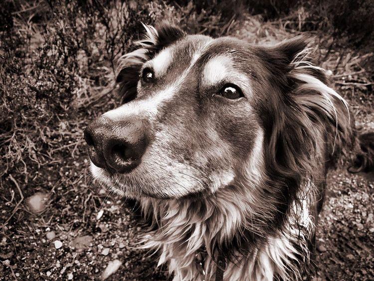 Dog Pets Portrait Close-up EyeEmNewHere