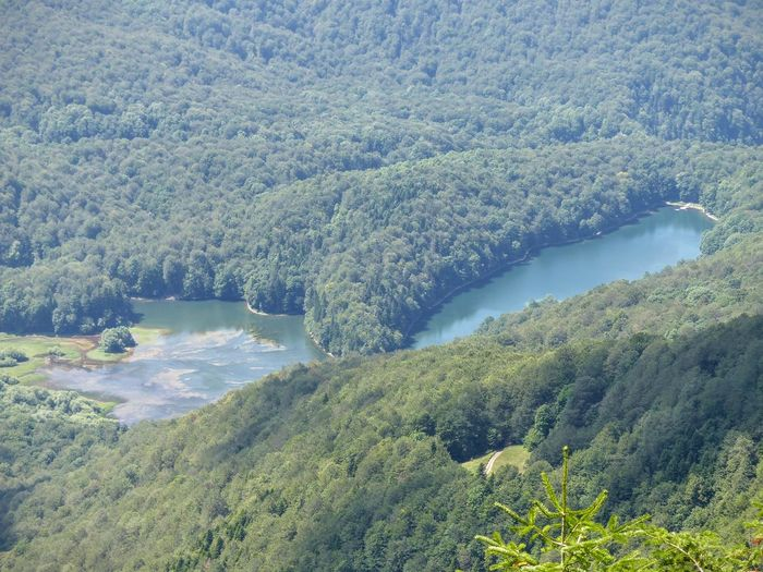 Green Natural Pattern Balkans Beauty In Nature Blue By The Tall One Day Forest Forest Photography Lake Landscape Montenegro Nature No People Outdoors River Scenics Tranquil Scene Tranquility Tree Water
