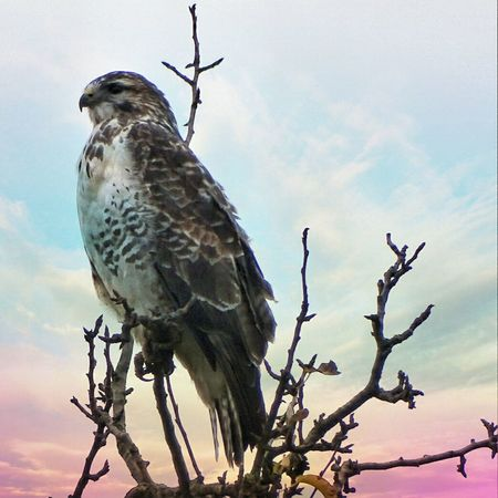 Bird Animal Wildlife Animal Themes Animals In The Wild No People Close-up Nature Outdoors Tree Nature_perfection Beauty In Nature Bergisches Land Landscape Winter Clouds Wildvogel Deutschland_greatshots Day