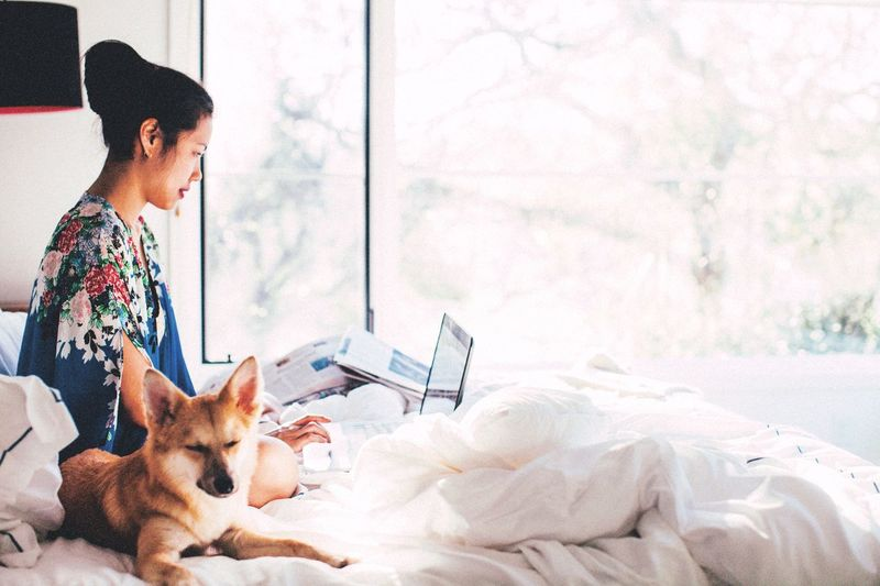 Working in bed with the dog. Comfy And Cozy Service Animals Self Employed Travel Blogger Blogger Life Blogger Blogging Work Space Natural Light Morning Rituals Morning Sun Morning Light Bedroom Window Bedroom Office Life Home Office Working Hard Working Animal Shiba Inu Pets Dog One Animal Bed Adult Women Bedroom Indoors  Domestic Animals Friendship Young Adult