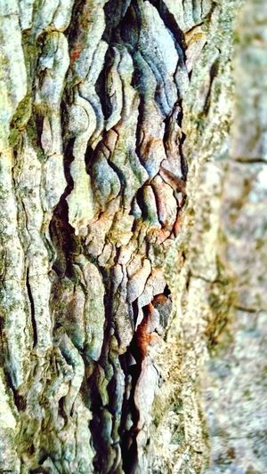 Wood Tree Wood - Material Wood Tree Tree Trunk Textured  Rough Bark Close-up Forestry Industry Woodpile Plant Bark Dead Tree Tree Ring Lumber Industry Firewood Fallen Tree Log Wooden Lichen Deforestation Tree Stump Rugged Fungus Cracked Moss