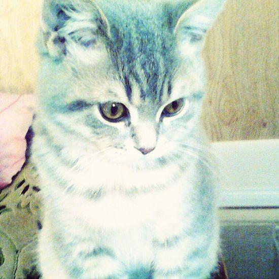 Мой кот когда был малинким