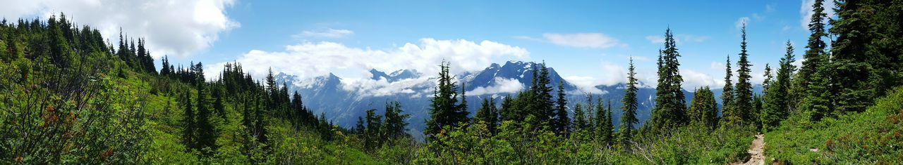 Panoramic Panoramic Landscape Nature Blue Sky Blue Sky And Clouds Mountains Mountain_collection Mountain View EyeEm Nature Lover Landscapes Landscape_Collection Naturelovers Pacific Northwest  Amazing View Scenic View Summer Elevation Beauty Greenery Sunny Day Treeline The Great Outdoors - 2017