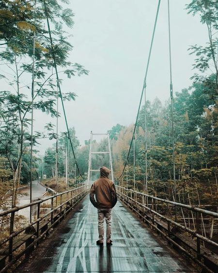 Rear view of man walking on footbridge in forest