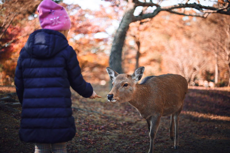 Rear view of girl feeding deer while standing on field in forest