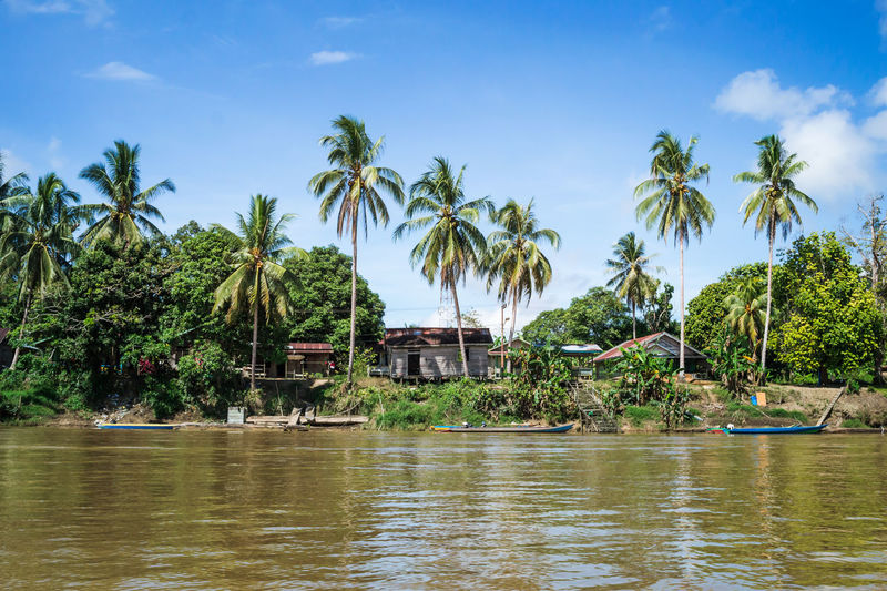 @Kayan River Beauty In Nature Building Built Structure Coconut Palm Tree Day Growth House Nature No People Outdoors Palm Tree Plant Scenics - Nature Sky Tranquility Tree Tropical Climate Village Water Waterfront