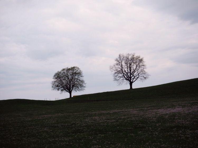 Enjoy The Silence Nature EyeEmSwiss Landscape Melancholic Landscapes Hello World