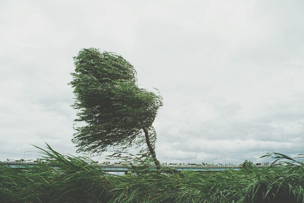 Wind swaying tree on field against sky