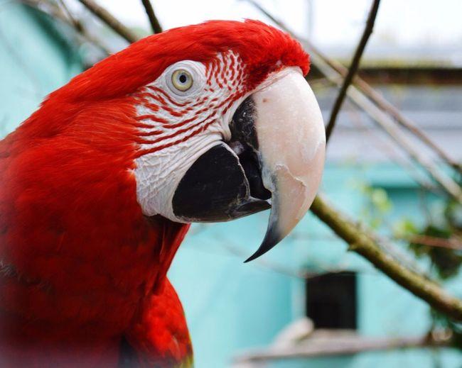 Bird Red One