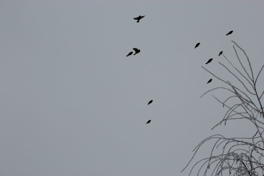 Animal Themes Animal Wildlife Animals In The Wild Beauty In Nature Bird Clear Sky Day Flying Low Angle View Nature No People Outdoors Spread Wings Weird Shapes No Edit/no Filter The Purist (no Edit, No Filter) Minimalism