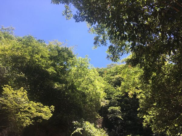 Tree Plant Sky Low Angle View Nature Tranquility Beauty In Nature