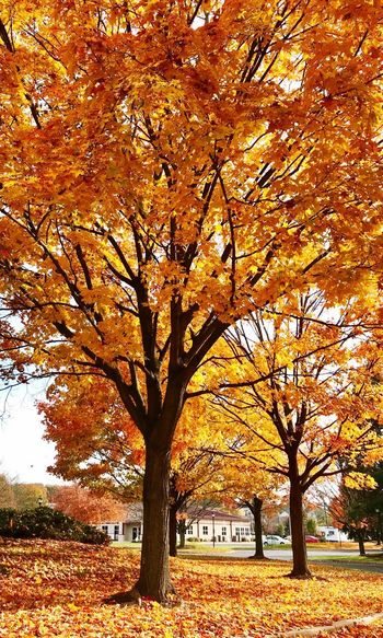 Tree Plant Beauty In Nature Nature Branch Growth No People Change Outdoors Tree Trunk Tranquility Trunk Autumn Orange Color Day Scenics - Nature Yellow Sunlight Park