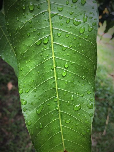Water of life Day Drop Fragility Freshness Growth Leaf No People Plant Water Water_collection Waterdrops Water On Leaf