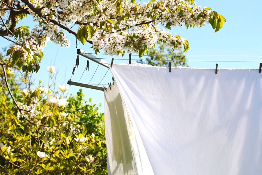 Detergent White Sheets Blossoming Tree Blossom Tree White WhiteCollection White Album White Color Laundry Day Linnen Sheet Cleaning Copyspace White Flowers Freshness Summer Summer Vibes Summer Days Fresh Fresh And Clean Drying Rack Clothing Line Clothespins Clothespin Fabric
