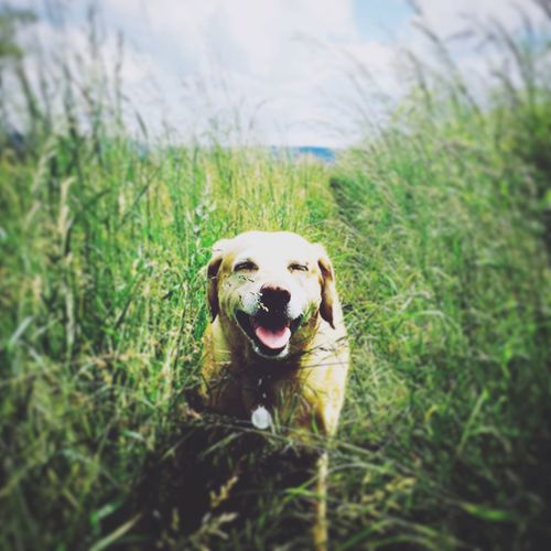 My happy pooch on her walk Dog Animal Pet First Eyeem Photo