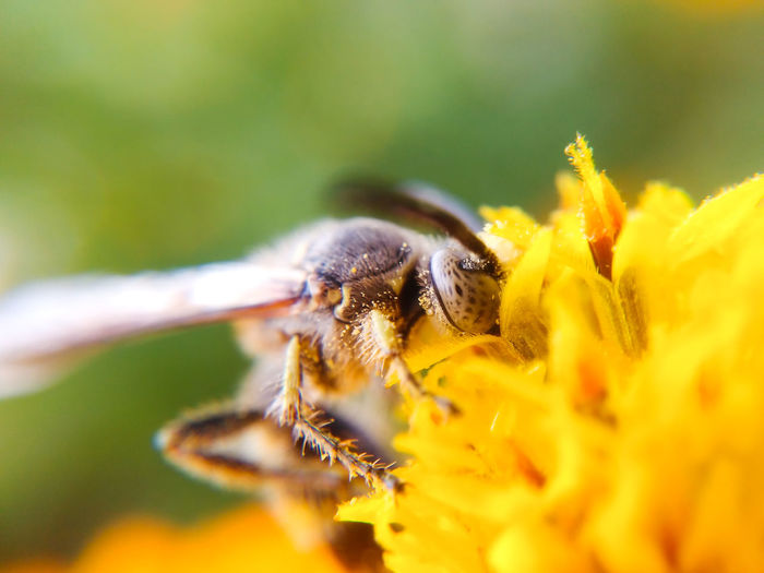Bee Insect Macro Flower Beauty In Nature Plant Animal Wildlife Close-up Animal Themes Nature Mobile Photography Nature Outdoors Plant One Animal Wasp Wasp Macro Wasp At Work Paint The Town Yellow