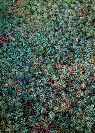 Bogotá Colombia Green Pattern Plants Psychedelic Psychedelic Reality Succulent Plant Succulents Suculento Verde Beautifully Organized