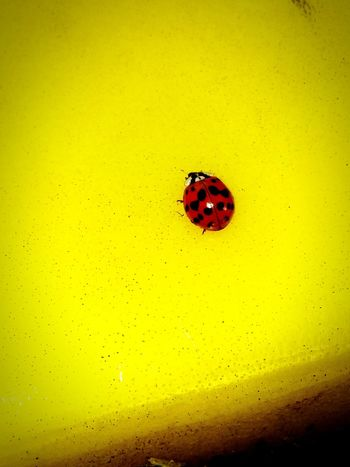 My little polka dot friend Ladybug