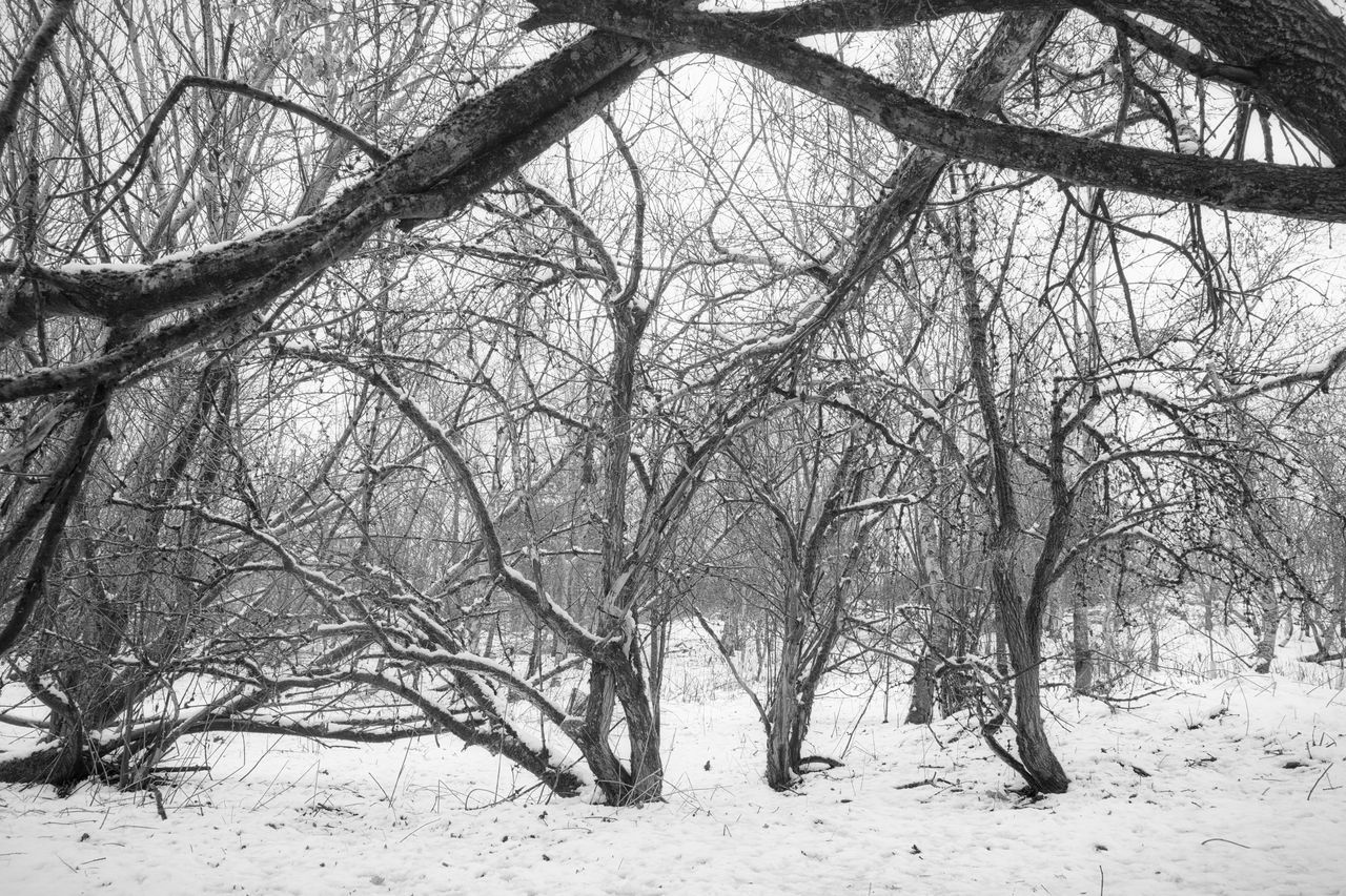 bare tree, winter, cold temperature, snow, tree, branch, nature, beauty in nature, outdoors, tranquility, no people, day, scenics