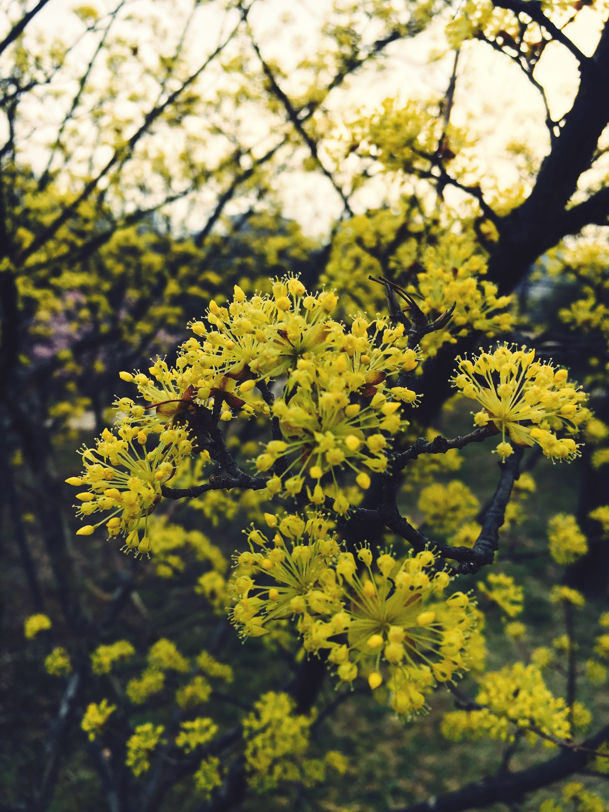 nature, growth, yellow, beauty in nature, flower, close-up, outdoors, branch, no people, plant, day, tree, fragility, freshness