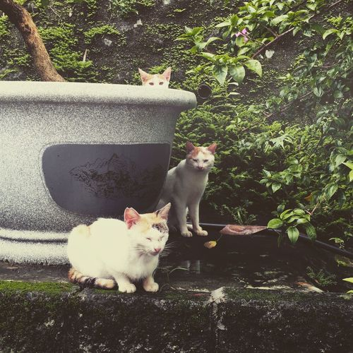 Animal Themes Cat Garageimg Looking At Camera Pets Relaxation Relaxing Sitting Taiwan