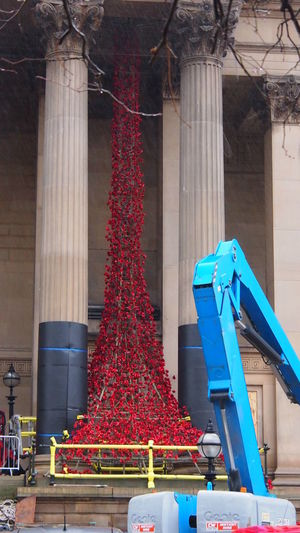 Liverpool Poppies  Rememberance St Georges Hall Under Construction... Weeping Window