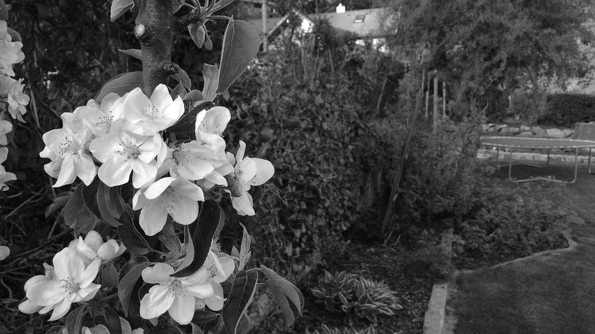 Beauty In Nature Black And White Nature Outdoors Close-up