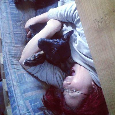 Peya Walkyrje Dog Perra Negra Doglover Mysyster Mihermana Amor Love Cama Descanso Viernes Flojera Feliz Happy Yo Arriba Camarote Sol Sunny Sleep Dormir Bebe Tienesolo4meses