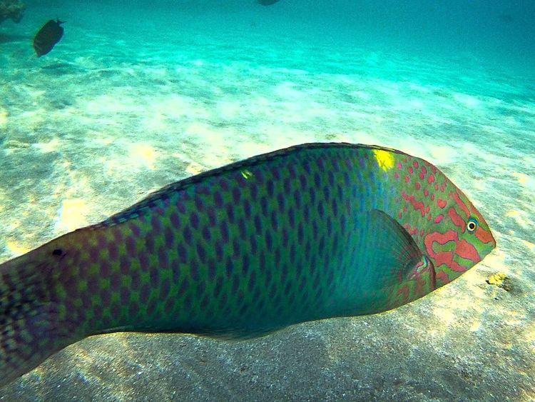 Mar Rosso Mar Rosso Marsa Alam Mare Sea Under Sea Fish Fisheye Raimbow Raimbowcolors Pesce Tropical Tropical Fish