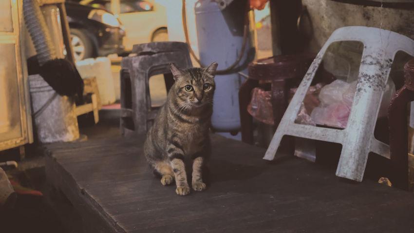 野良猫 Stray Cat Cat Cat Lovers Cats Of EyeEm Gatto Cats Lovers  貓咪 Kot Cats 🐱 Meow🐱 Neko Cat Photography Cats Chat 猫 Meow 貓 Gato Cat♡ Katze Hkcats 猫の写真 喵星人 貓星人