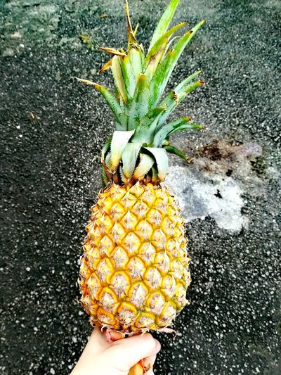 Pineapple🍍 Pineapple Fruit Fruits Tropical Summertime Tropical Fruits Healthy Lifestyle Healthy Fruit Tropical Plants Tropical Island Fruits And Vegetables Fruits Lover Pineapple Fruit Holding Fruits ♡ Fruit Photography Fruit Market Fruitjuice