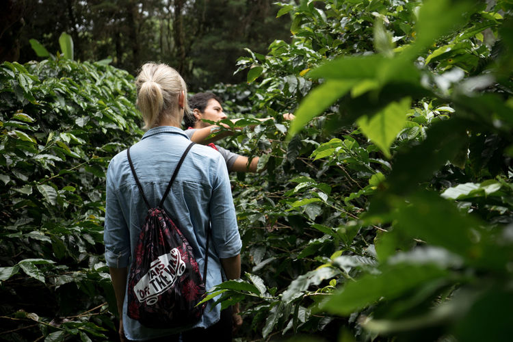 Coffee Plantations Costa Rica Agriculture Blond Hair Casual Clothing Freshness Growth Outdoors Picking Plant Real People Rear View Tree Women