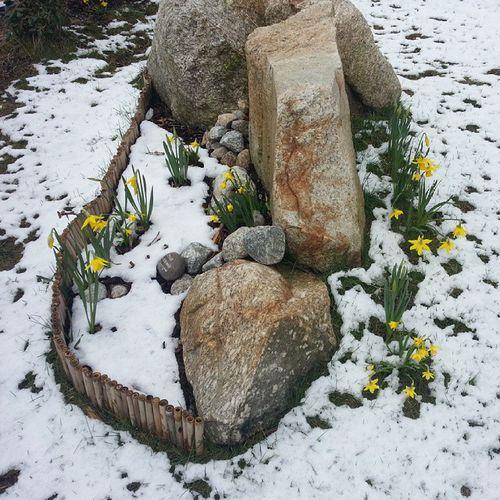 La primavera en Noruega es un tanto un extraña. Blomster Spring Strangeweather Floresdelikea 25gradosenespaña