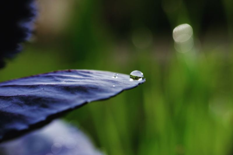 Drop Close-up Nature Water Focus On Foreground No People One Animal Growth Plant Animals In The Wild Wet Day Animal Themes Outdoors Insect Leaf Fragility Purity Beauty In Nature Freshness