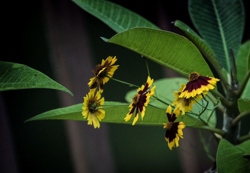 Yellow and gold Wildflowers In Bloom Beauty In Nature Black Eyed Susans Flower Flowering Plant Fragility Green Color Leaf Nature Plant Plant Part Yellow