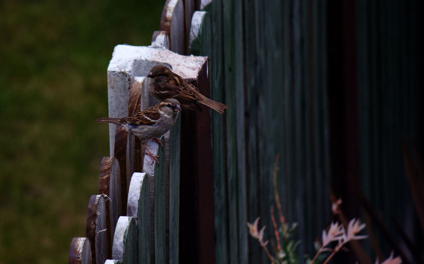 Close-up of rusty metal on wood