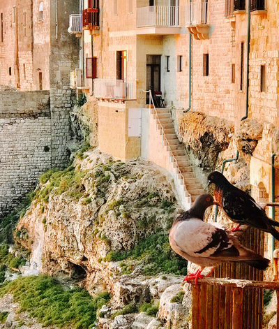 Flirting Balcony Shot Dove Love Friends Morning Light Adriaticsea Animal Themes Animal Wildlife Animals In The Wild Architecture Bird Black And White Bird Building Exterior Built Structure Day Nature No People Old World Charm One Animal Outdoors Perching Planning A Trip Restingplace Water