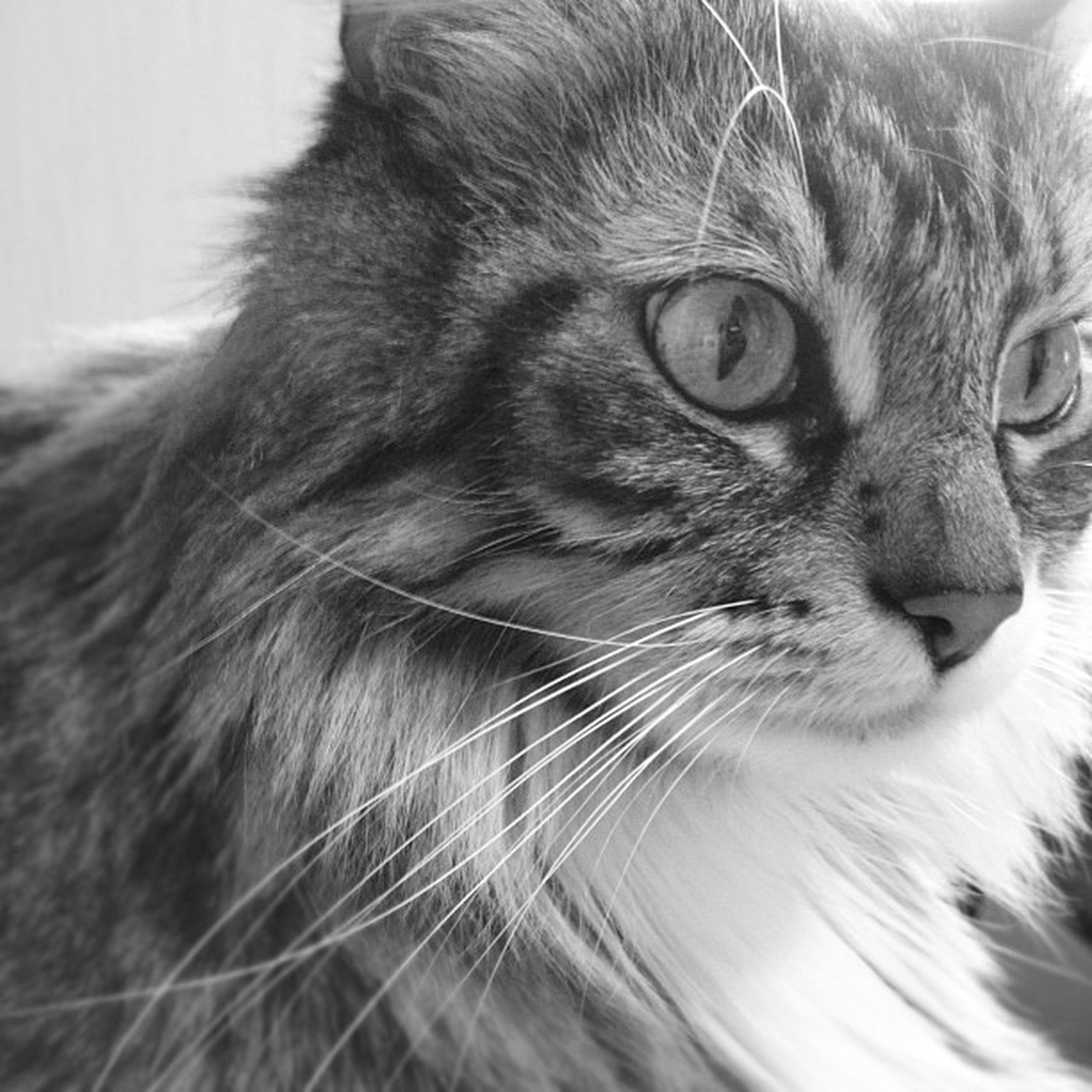 pets, one animal, domestic animals, animal themes, whisker, domestic cat, close-up, portrait, mammal, no people, looking at camera, feline, indoors, day