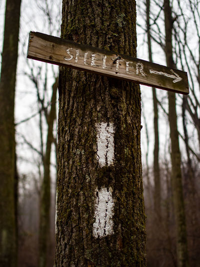 Close-up of sign on tree trunk in forest