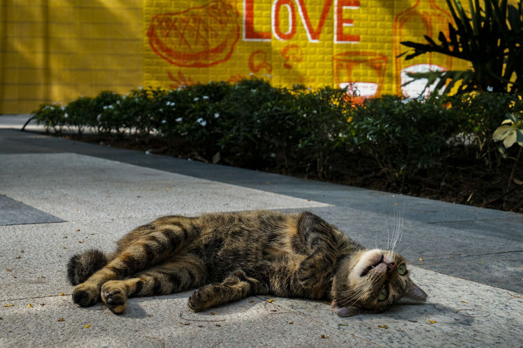 Animal Animal Themes Cat City Day Domestic Domestic Animals Domestic Cat Feline Lying Down Mammal No People One Animal Pets Relaxation Resting Road Sleeping Street Tabby Vertebrate Whisker A New Beginning #NotYourCliche Love Letter My Best Photo