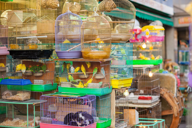 Various birds in cage for sale at market