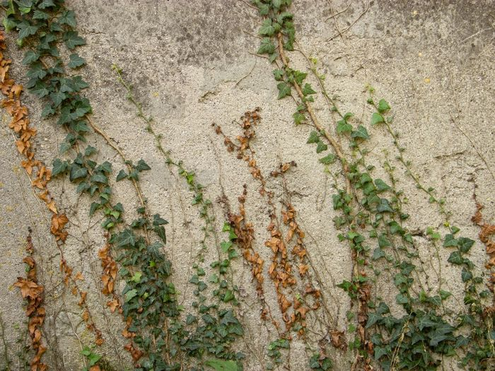 High angle view of ivy growing on wall