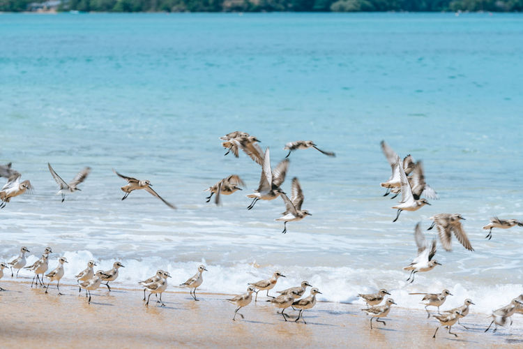 Group Of Animals Animal Animal Themes Large Group Of Animals Animal Wildlife Animals In The Wild Water No People Nature Vertebrate Day Focus On Foreground Beauty In Nature Sea Bird Land Winter Motion Mammal Flock Of Birds Herd