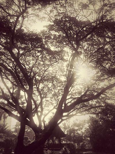 เงียบ..สงบ..ร่มเย็น..ใต้ต้นไม้ใหญ่.. Trees Sepia Thailand_allshots Nature_collection Eye4photography