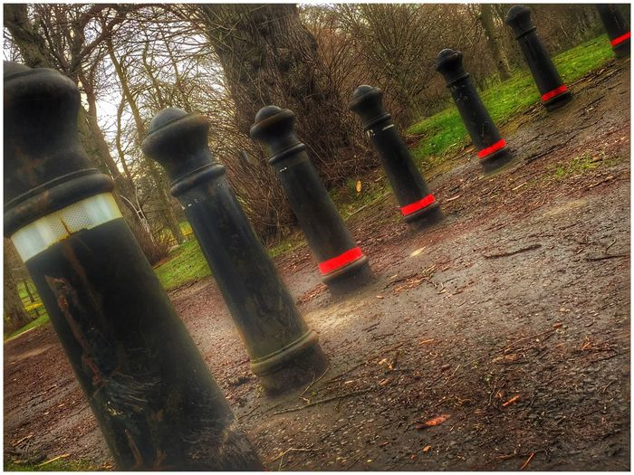 Bollards Black Red White Posts Trees at Camperdown Park in Dundee Park Country Park Nature Man Made Object Eyemphotography EyeEm Gallery Eye4photography  EyeEm Eyeemphotography